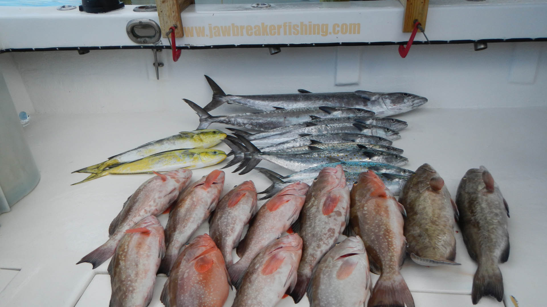Grouper fish caught on charter by Jawbreaker Charters.
