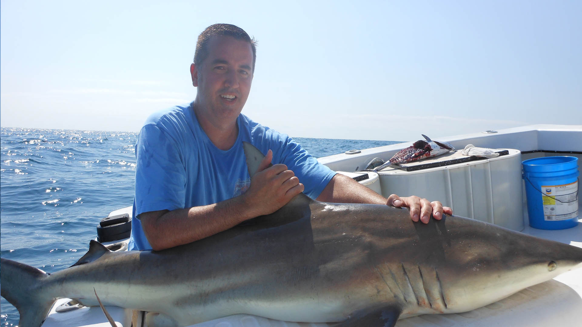 Large shark caught on fishing charter off the coast of St. Petersburg, FL.
